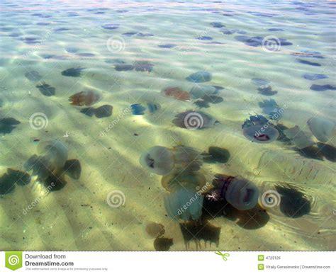 imagenes mar negro medusas azules en el mar negro foto de archivo imagen