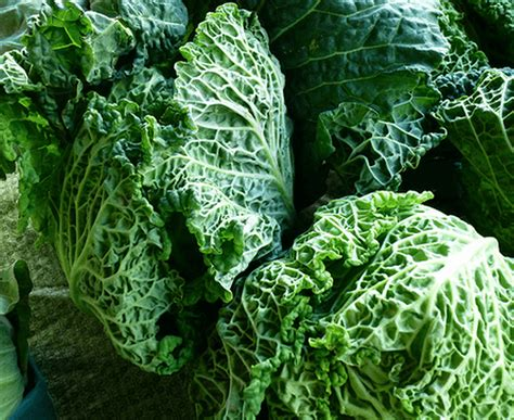 4 vegetables you shouldn t eat 10 healthy vegetables you shouldn t live without
