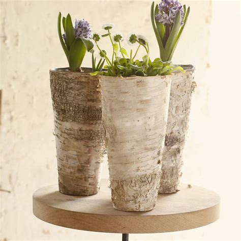 Birch Bark Vase by Imperfect Birch Bark Vase By Letteroom