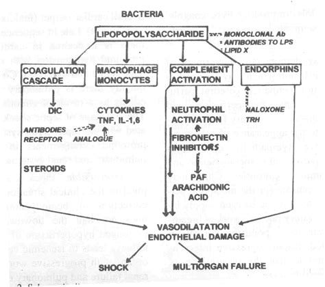 septic shock pathophysiology flowchart sepsis pathophysiology diagram