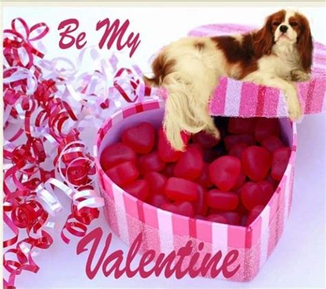 king valentines happy valentines day cavalier king charles spaniel