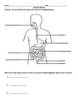 Digestive System Organ and Function Matching Activity