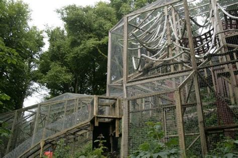 animal sanctuary plymouth the monkey sanctuary looe all you need to before