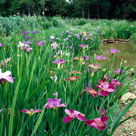 the best plants for a water garden 15 flowers for the best plants for a water garden 15 flowers for