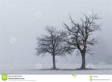 lone trees landscape stock image image 17839931