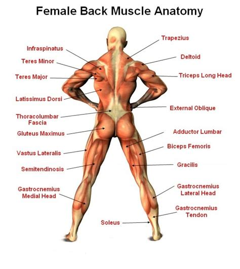quadricep tattoo pain easy to do hip muscle stretches for tight hips and hip