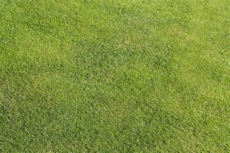 green grass lawn free stock photographs for your blogs