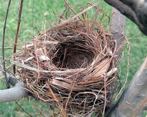the birdmaker s nest where your treasure will be found safe and sound books bird s nest parenting for joint custody new jersey