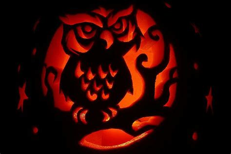 owl pumkin bird pumpkin carving stencils and patterns