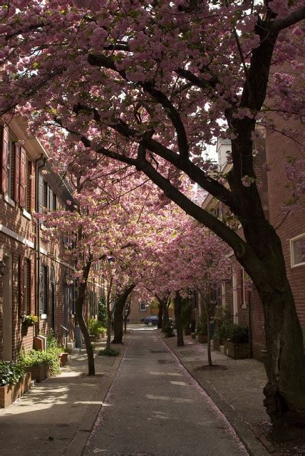 mr d cherry tree pa 173 best the phillyscape images on philadelphia philadelphia flyers and