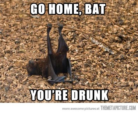 Bat Meme - 69 best images about go home you re drunk on pinterest