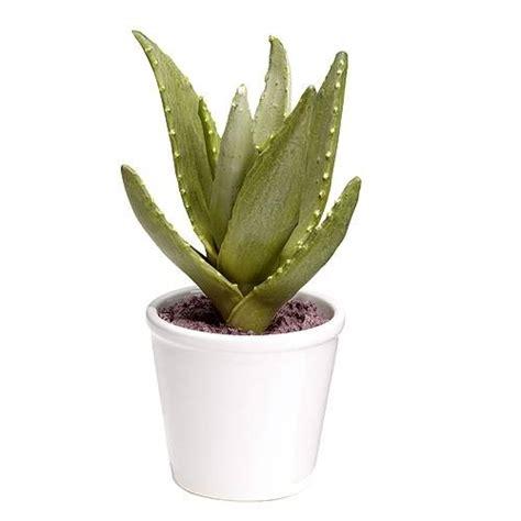 vaso piante vasi