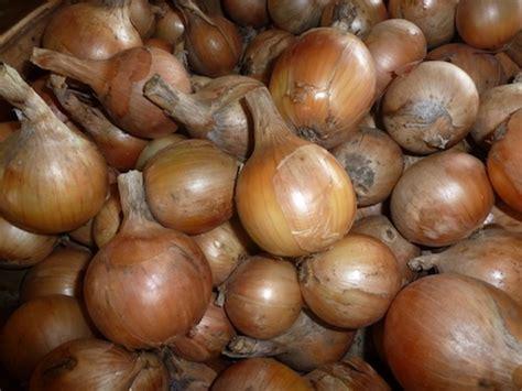 Shelf Of Onions by Onions And Garlic Storage Tips Vermont Organic Farm