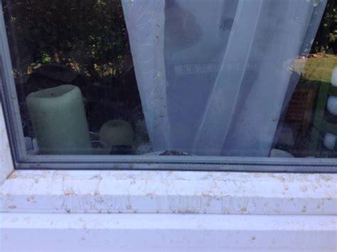 Wasser An Fenster by Wasser Zwischen Fassade Und Fenster Bauforum Auf