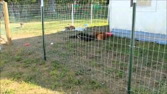 Backyard Dog Fence by Cheap Fencing Ideas For Dogs Fence Ideas