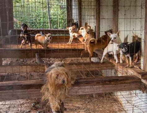 puppy mill rescue colorado springs how to spot a bad breeder here are some warning signs to look out for