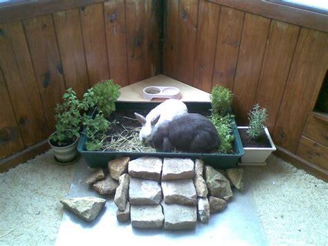 indoor garden for rabbits the 25 best indoor rabbit house ideas on