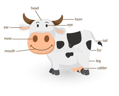clipart mucca illustrazione della parte di vocabolario della mucca
