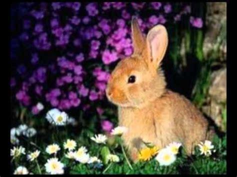 imagenes de animales terestres los animales terrestres youtube