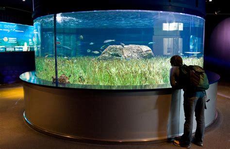 Aquascape Pool Design The Aquarium In Valencia Spain The Most Beautiful