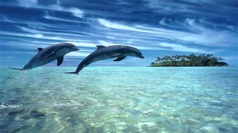 dolphin dreams melody oceans zen  relaxation