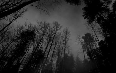 black and white pictures anime forest 9 cool hd wallpaper
