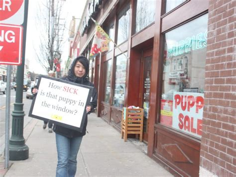 shake a paw puppy mill protest of lynbrook pet shop leads to arrest malverne ny patch