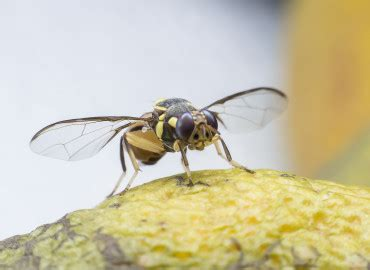 what causes fruit flies in the bathroom nashville plumbers service advice