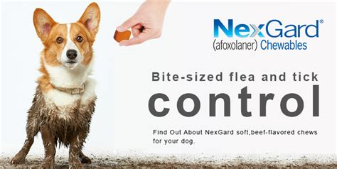 what is nexgard for dogs nexgard buy nexgard chewable for dogs budgetpetcare