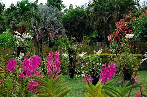 orchideen garten bali orchideen garten ihr spezialist f 252 r individuelle
