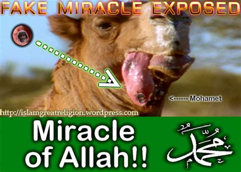 Miracle Of allah miracle in camel islamic miracle exposed islam world s greatest religion