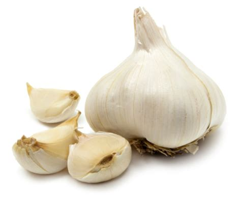 is garlic toxic to dogs garlic toxicity and pets