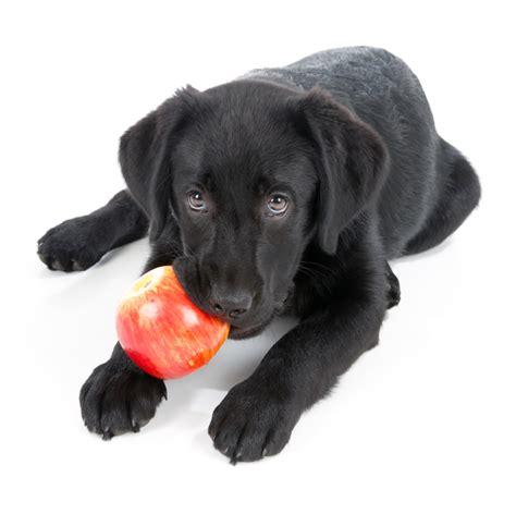 dogs apples feeding your table scraps