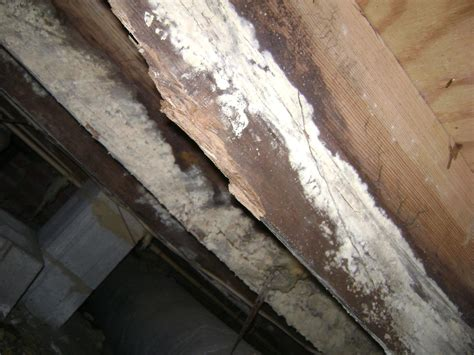 foundation repair products  importance  crawl space