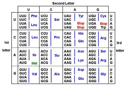 Dna Codon Table by Chapter 4 Gene Enzyme Rna Transcription Genetic Code
