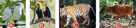 soal pelestarian hewan  tumbuhan langka info terbaru