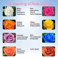 color meaning of roses 1000 images about definitions of flowers on