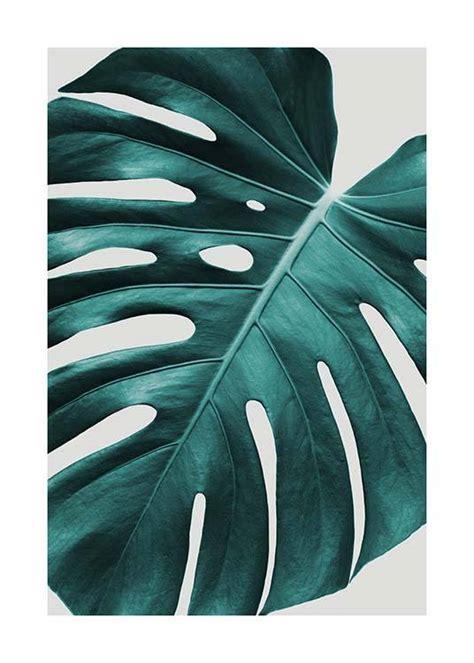 Poster Monstera monstera plant poster