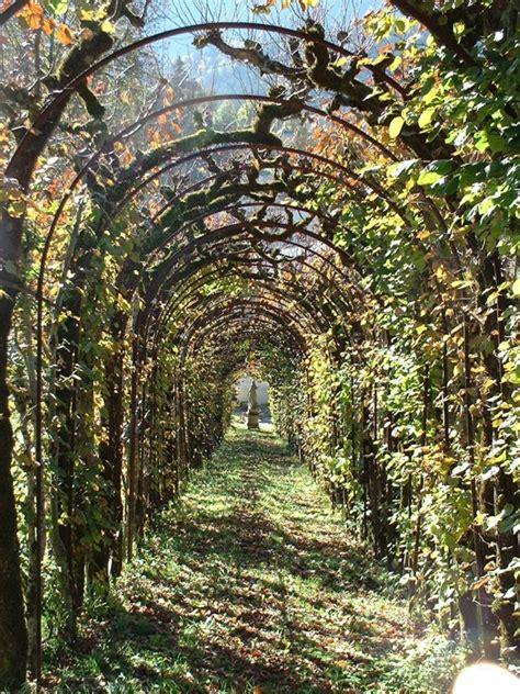 whats a trellis garden trellis home interior design ideashome