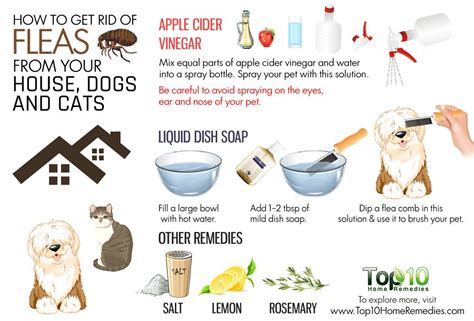 dog fleas in house how to get rid of fleas from your house dogs and cats top 10 home remedies