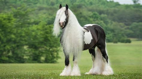 imagenes surrealistas de caballos imagenes de caballos youtube