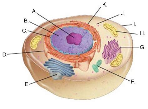 animal cell with labels imagequiz label the animal cell