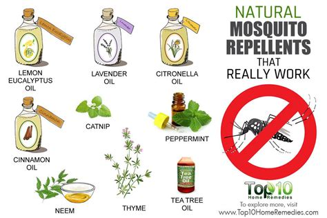 10 natural mosquito repellents that really work top 10