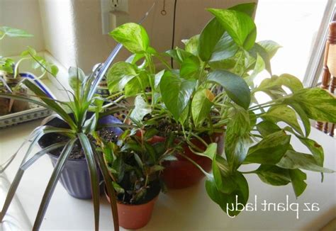 common house plants common houseplants related keywords common houseplants keywords keywordsking