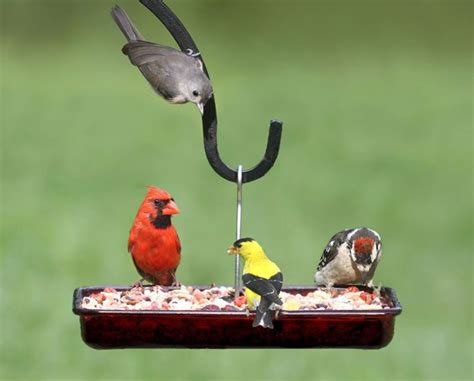 1000 images about for the birds on pinterest bird
