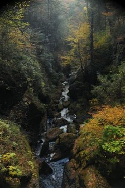 Bushkill Falls Cabins by Modest Accommodations With Great Location Review Of Alvin S Log Cabins Henryville Pa