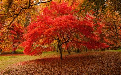the world s best photos of autumn and woodlands flickr hive mind your favourite places for leaf peeping in britain