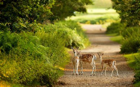 imagenes de paisajes con animales fondos de pantalla paisajes y animales en hd gratis para