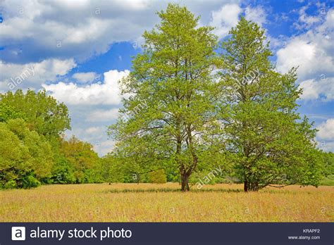 len xanten auenlandschaft stock photos auenlandschaft stock images