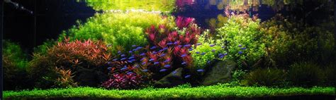 what is aquascaping what is aquascaping cape contours